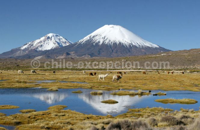 1. Parc Lauca, nord du Chili